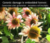 Mutated Flower Fukushima Radiation Echinacea Plant Deformed two coronas genetic damage forever